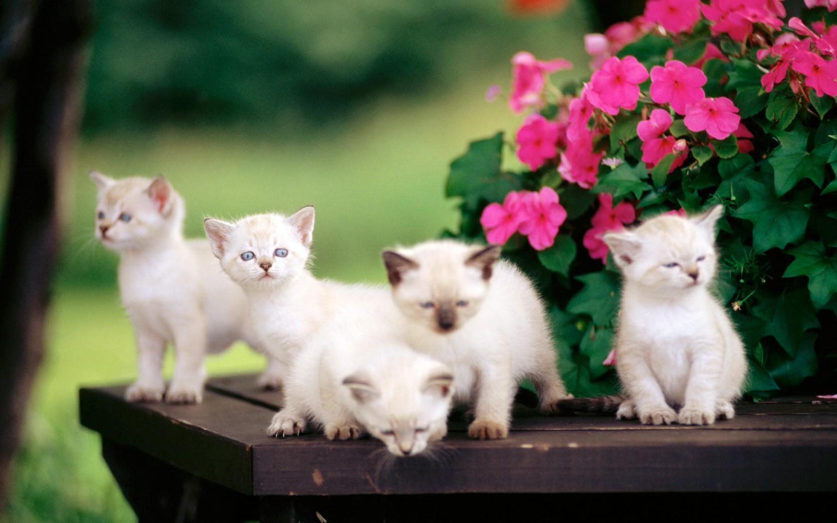 宽屏小猫写真桌面壁纸壁纸 第20张高清图片
