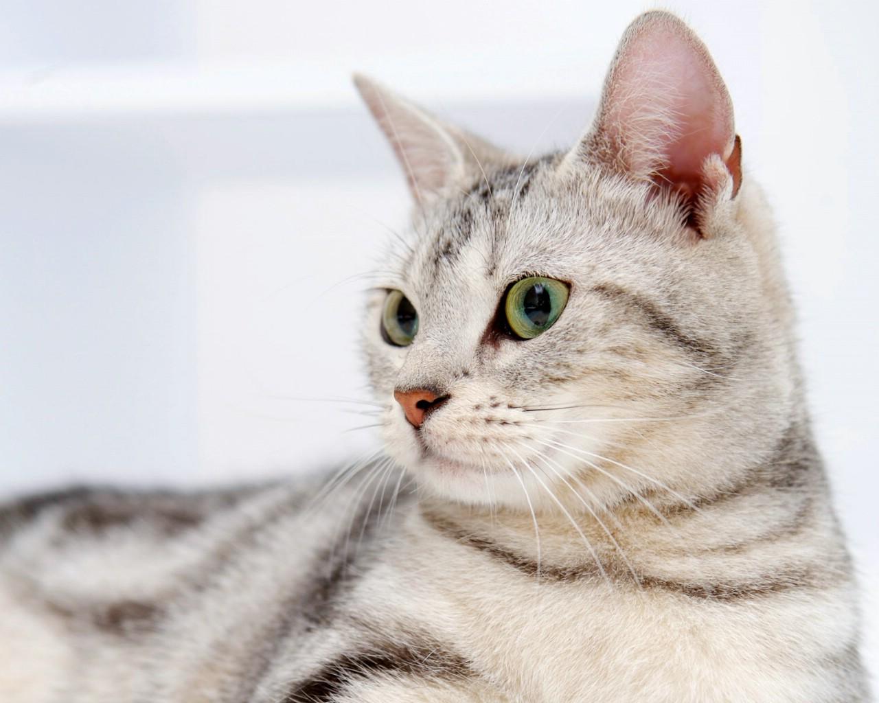 壁纸1280×1024高清可爱小猫咪壁纸壁纸