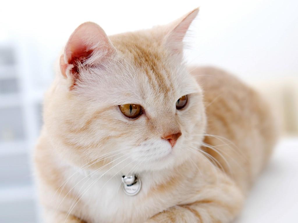 壁纸1024×768高清可爱小猫咪壁纸壁纸