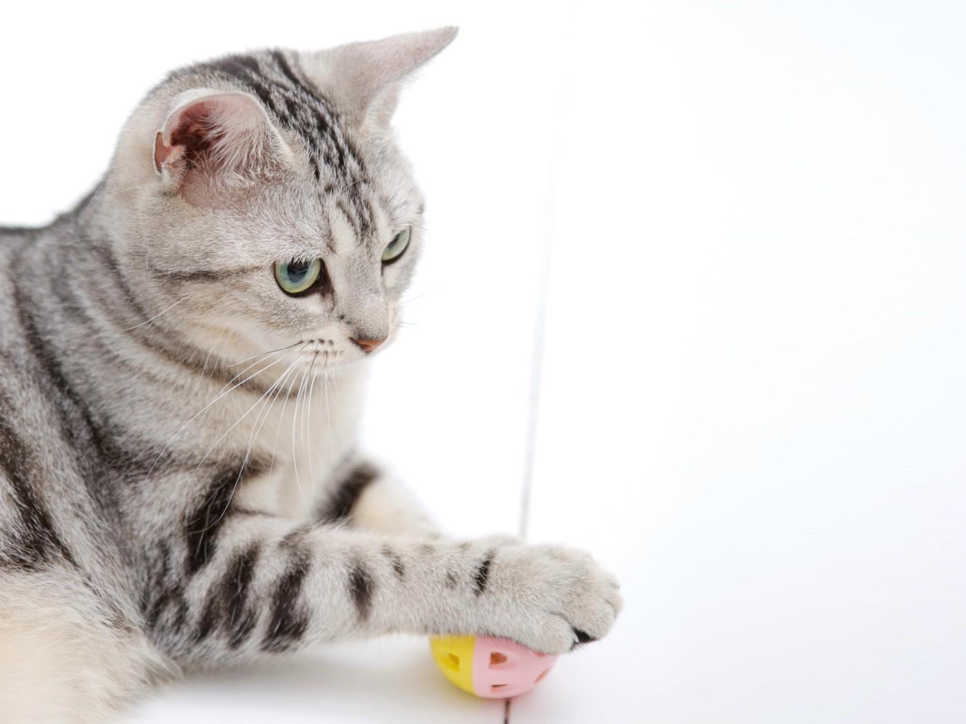 壁纸1400×1050高清可爱小猫咪壁纸壁纸