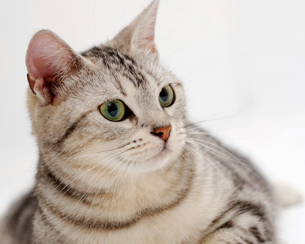 可爱小猫咪图片 超可爱小猫咪图片 可爱小猫咪卖萌图片 可爱小猫咪