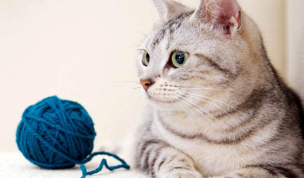 高清可爱小猫咪壁纸壁纸图片动物壁纸动物图片素材