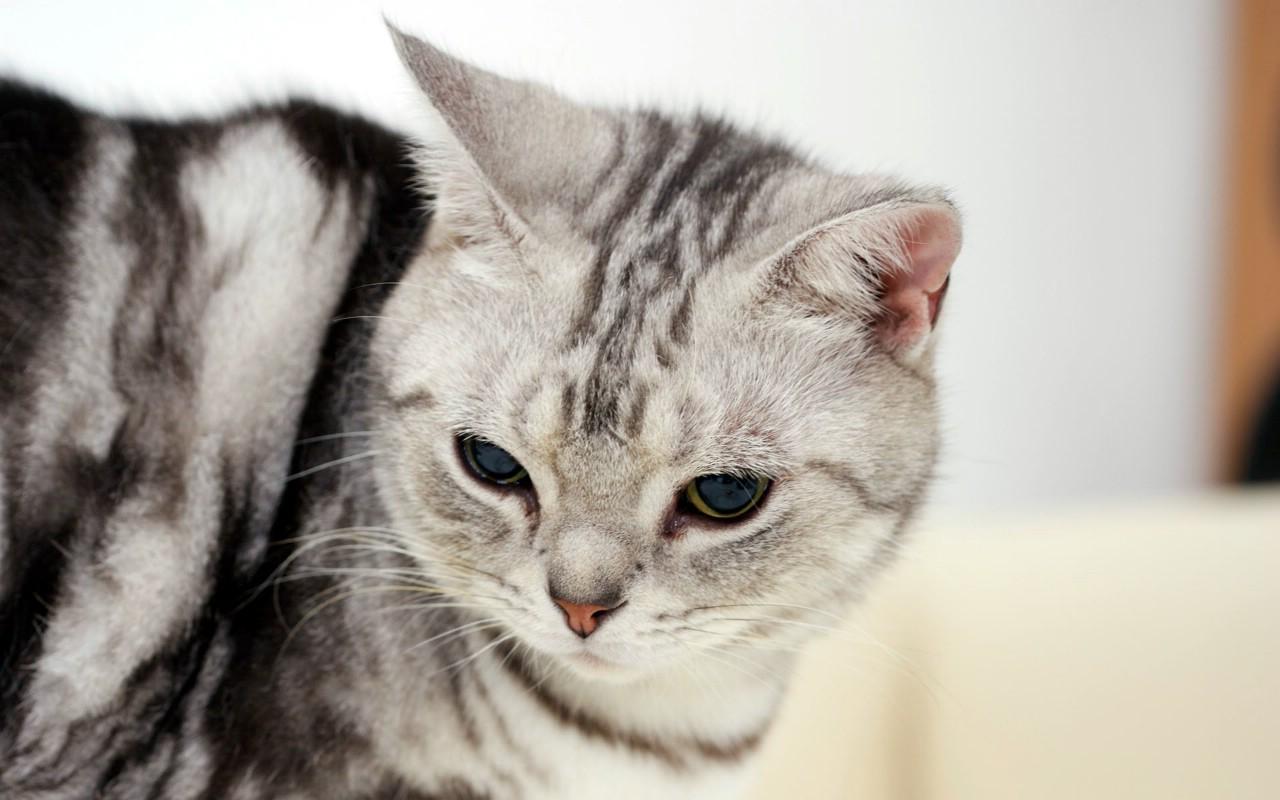 800高清可爱小猫咪壁纸壁纸 高清可爱小猫咪壁纸壁纸
