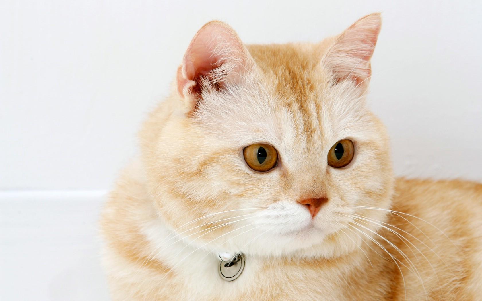 高清可爱小猫咪壁纸壁纸 高清可爱小猫咪壁纸壁纸