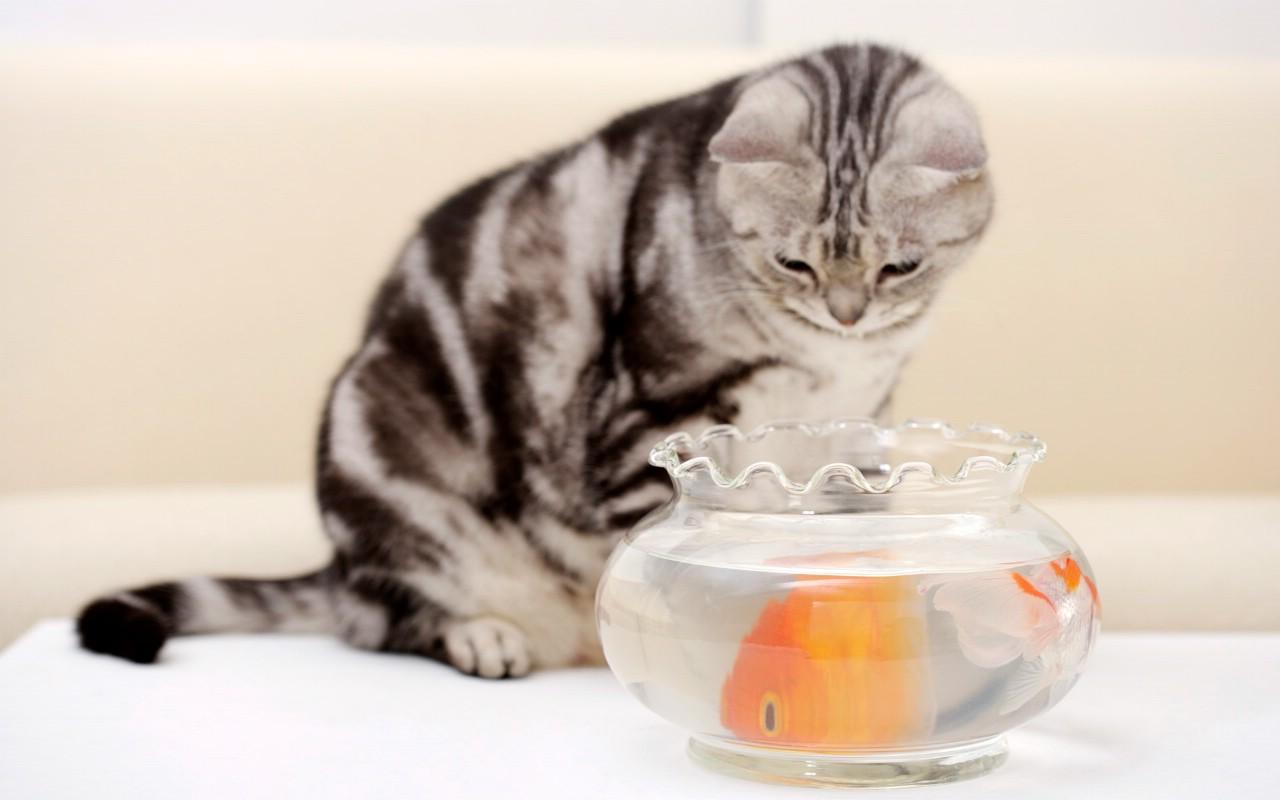 可爱小猫咪头像_动漫情侣头像
