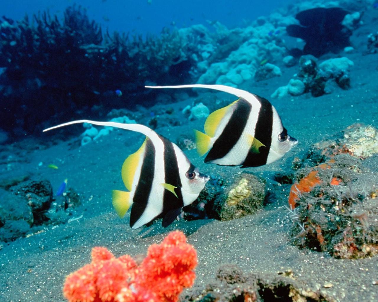 海洋生物图片 100种海洋鱼类名称大全图片