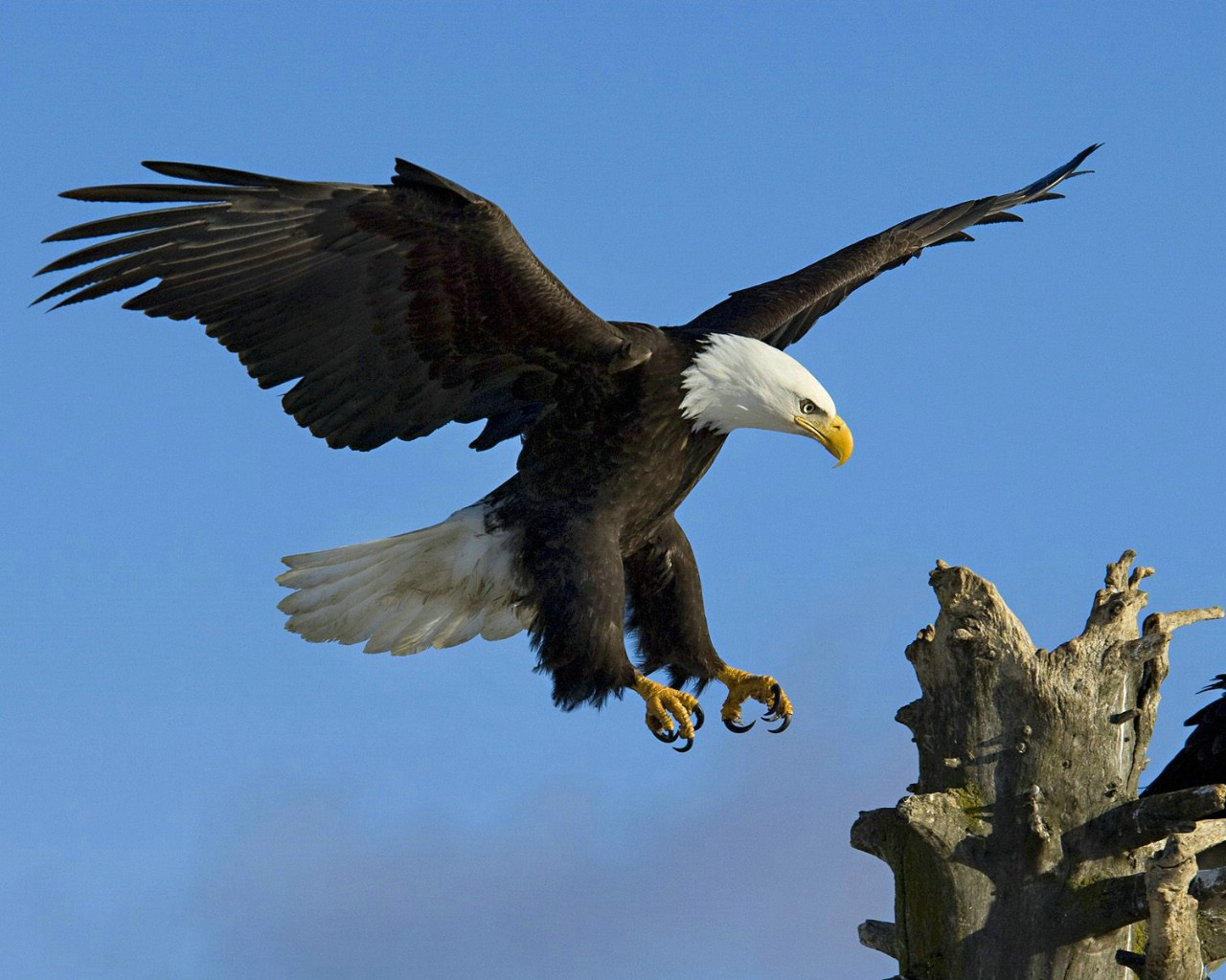 eagle 1280x1024 wallpaper - photo #37