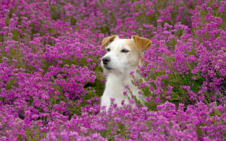 桌面可爱狗狗壁纸_桌面可爱狗狗壁纸图片分享