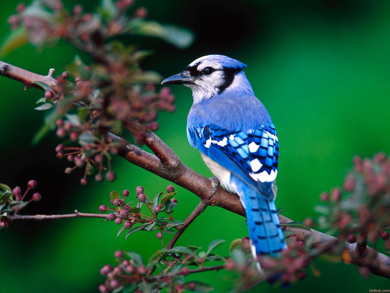 可爱小鸟漂亮鸟类写真壁纸壁纸,可爱小鸟漂亮鸟类