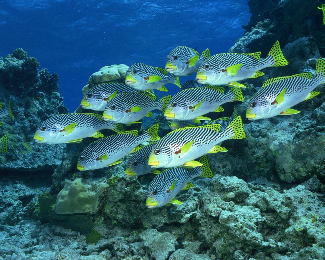 海底电脑桌面壁纸 可游动海洋生物桌面带时间的壁纸,有海里的动物还有
