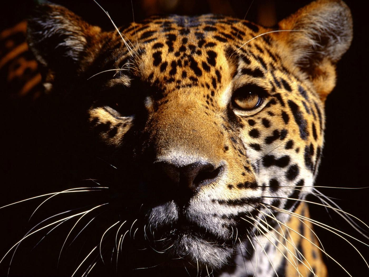 动物高清壁纸壁纸 野生动物高清壁纸壁纸图片 动物