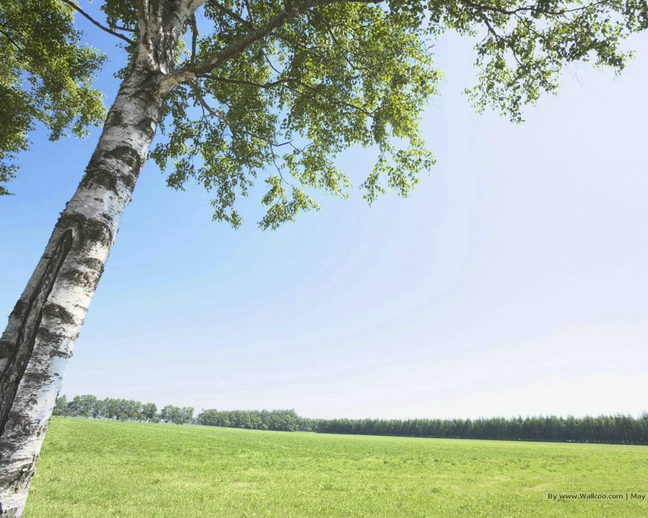 xp蓝天草原(19)-艺术设计-壁纸   蓝天白云草地桌面壁纸 蓝天高清图片