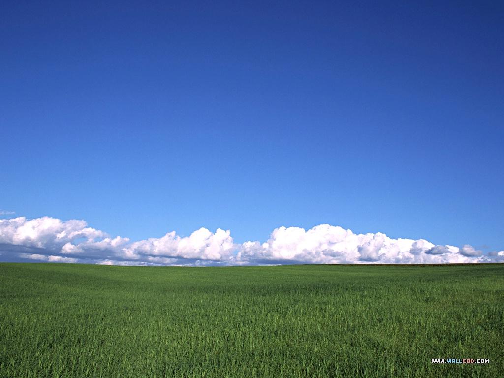 768哇 蓝天绿草自然壁纸壁纸,哇 蓝天绿草自然壁纸壁纸图片图片
