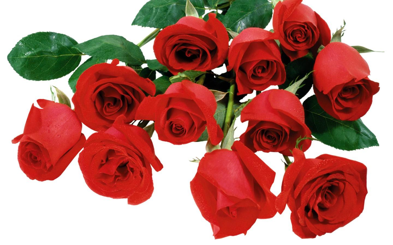 铅笔画玫瑰教程图片