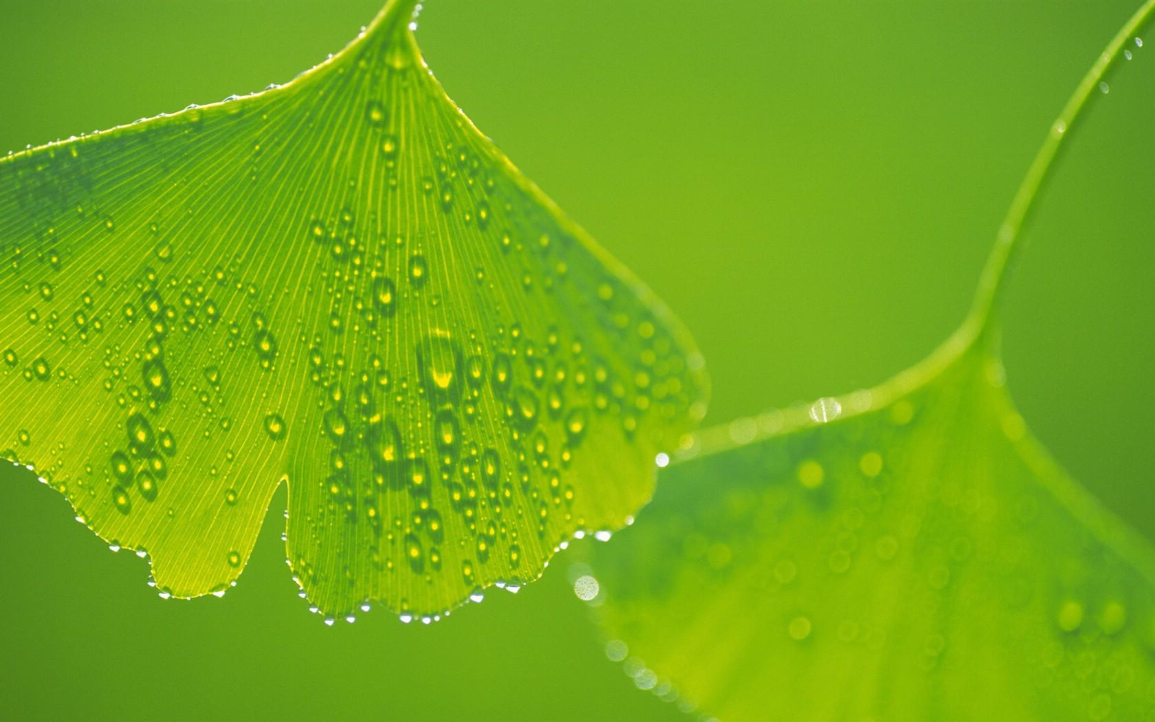 近日拍了几片绿色植物的叶子,均用了黑背景,多看绿色对眼睛有 图片图片