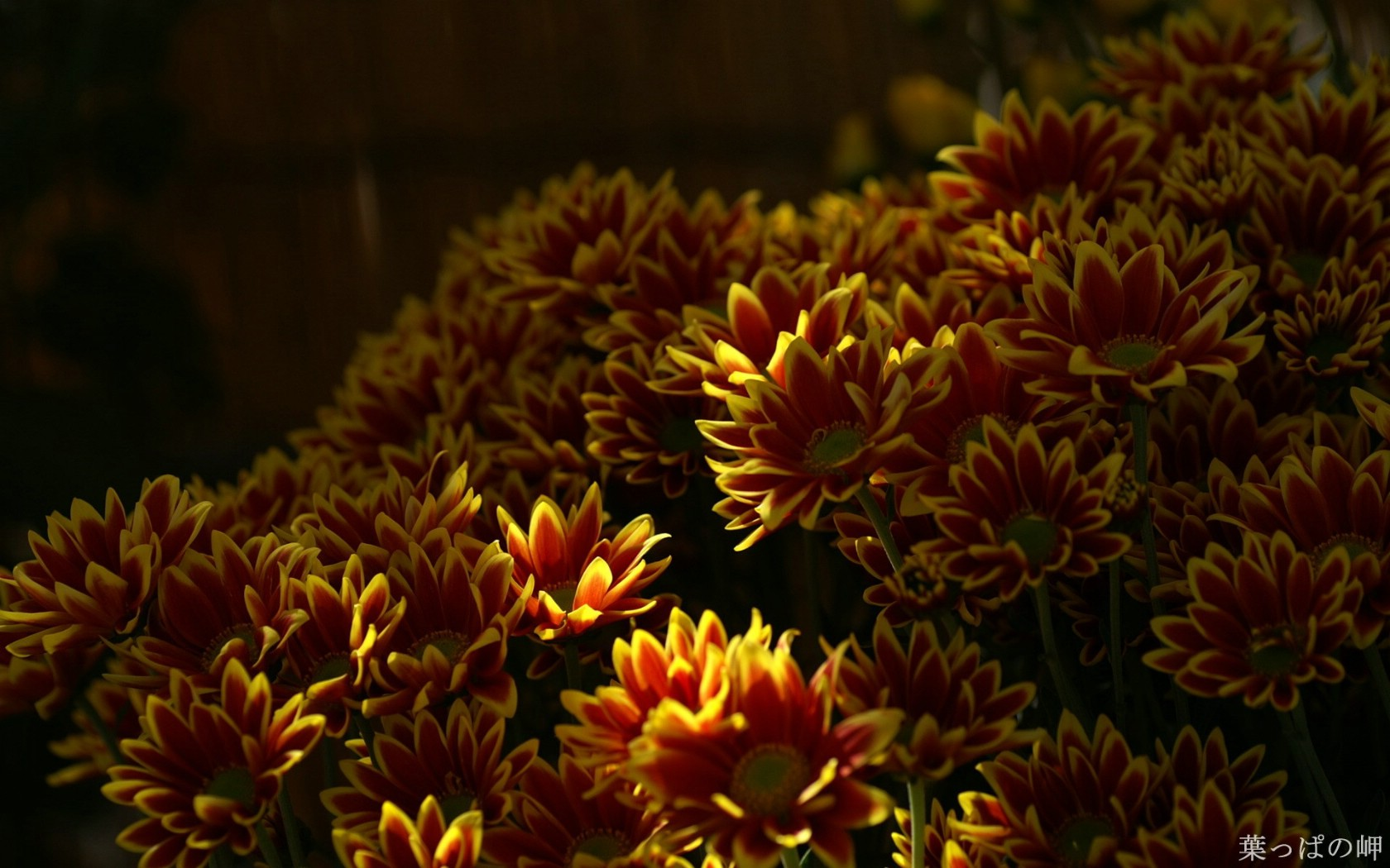 壁纸 花卉/高精度个人花卉摄影集