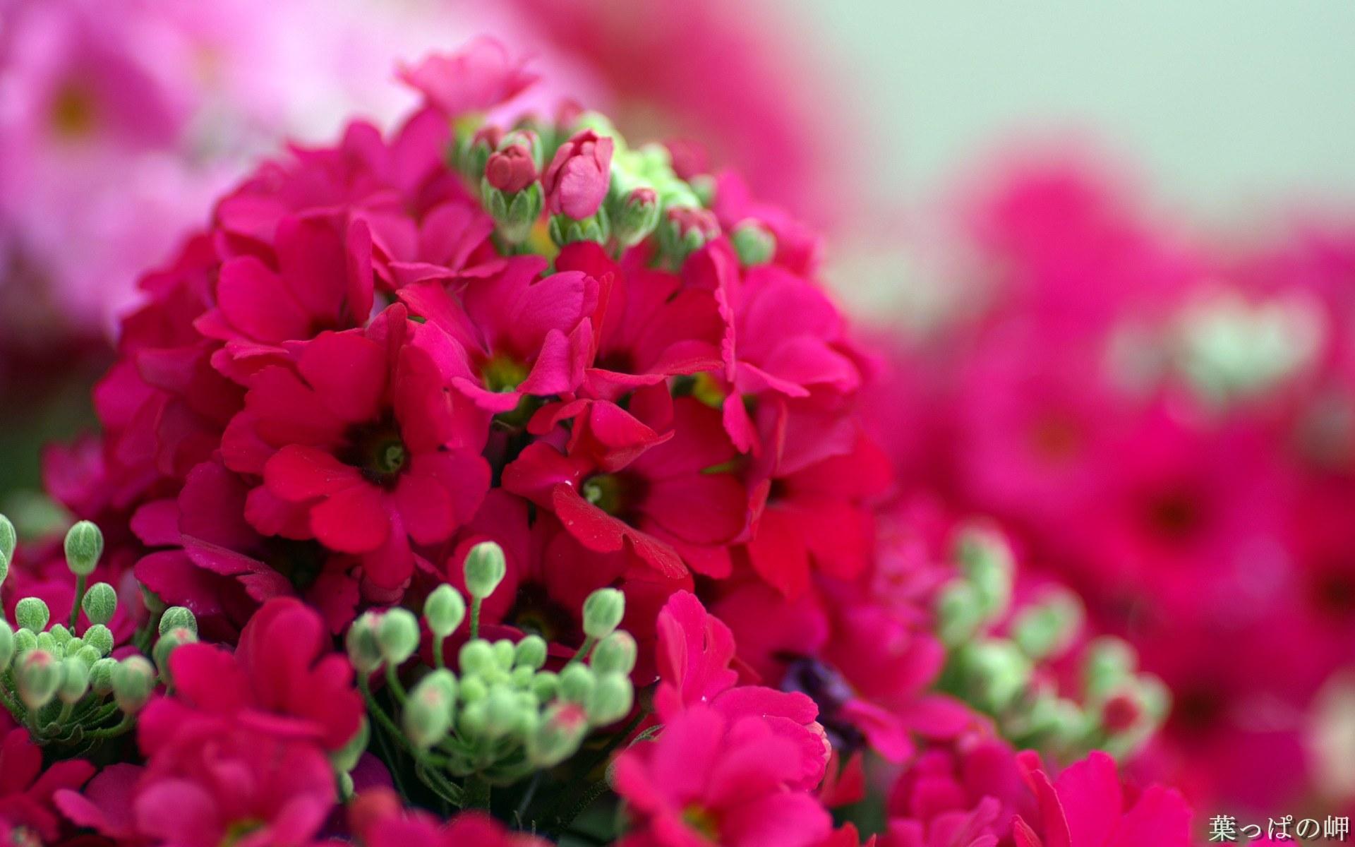 壁纸/高精度个人花卉摄影集