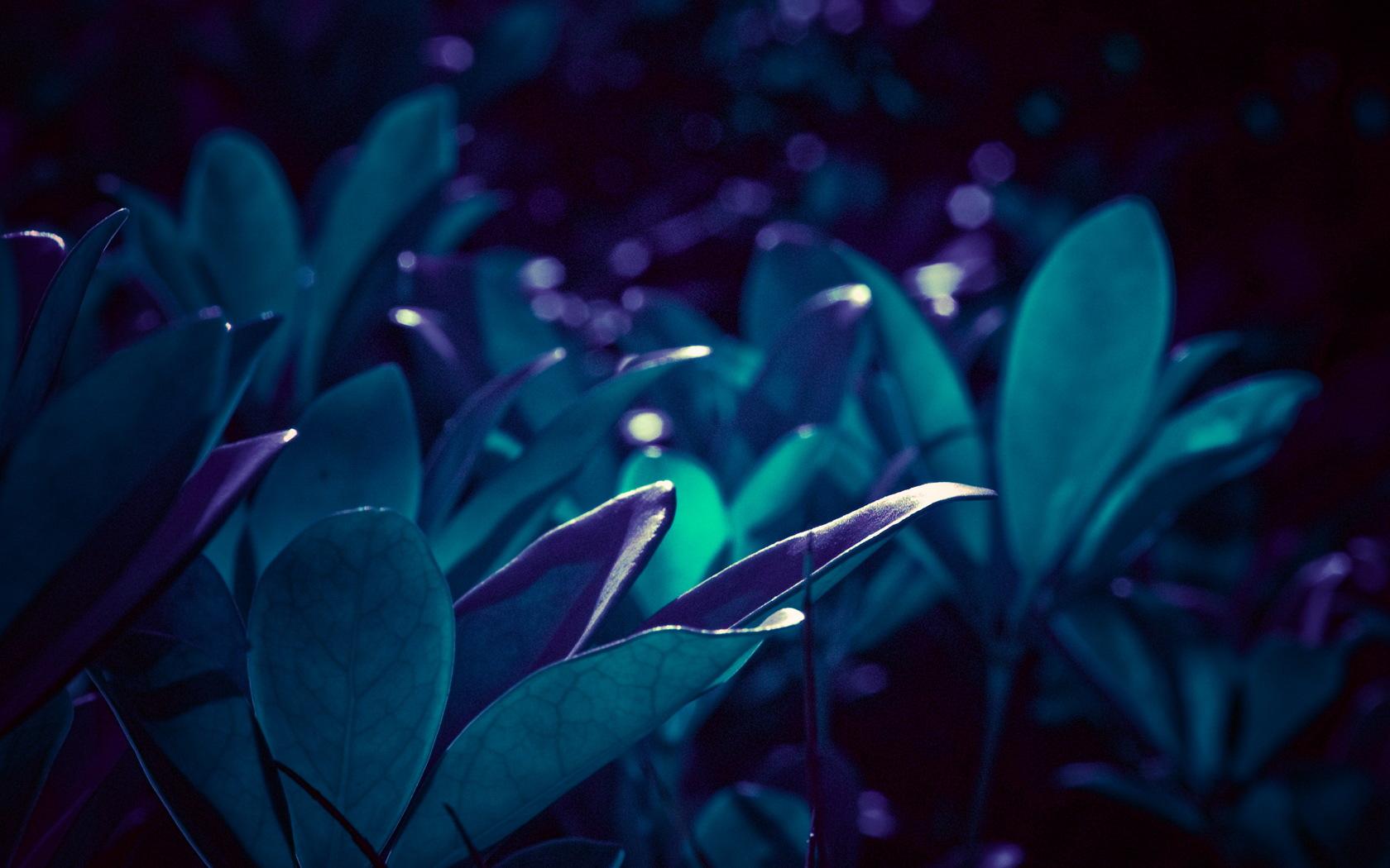 壁纸1680×1050高清宽屏植物壁纸壁纸 高清宽屏植物壁纸壁纸图片植物壁纸植物图片素材桌面壁纸