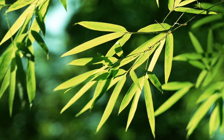 壁纸1440×900绿色竹情壁纸壁纸 绿色竹情壁纸壁纸图片植物壁纸植物图片素材桌面壁纸