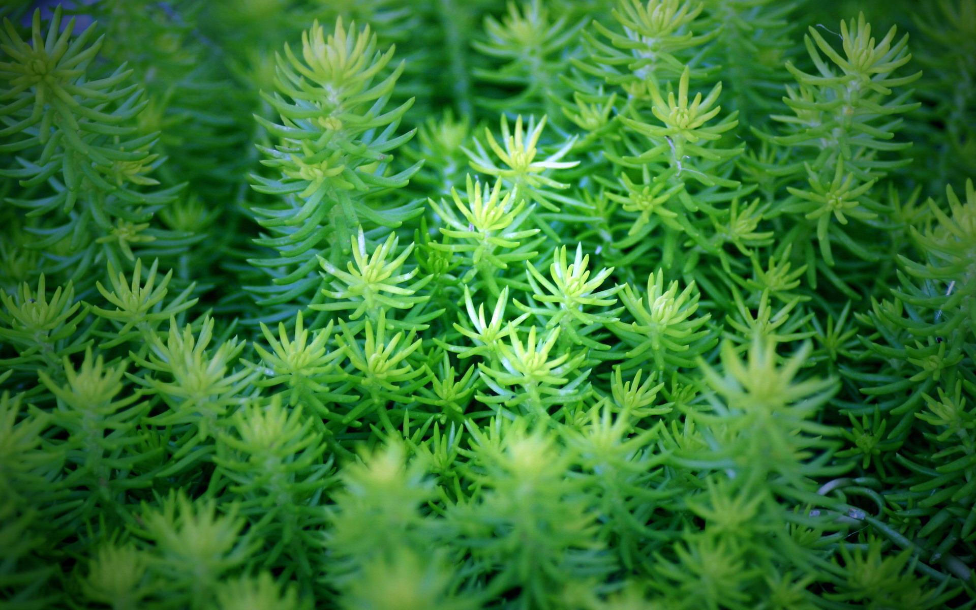 绿色植物壁纸壁纸,清新绿色植物壁纸壁纸图片-植物