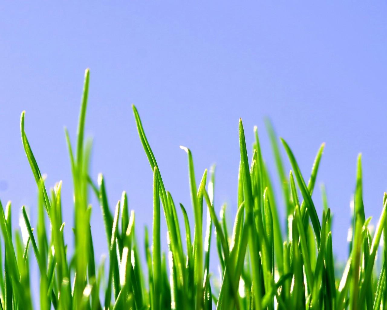 壁纸1280 215 1024清新绿色植物壁纸壁纸 清新绿色植物壁纸壁纸图片 植物壁纸 植物图片素材 桌面壁纸