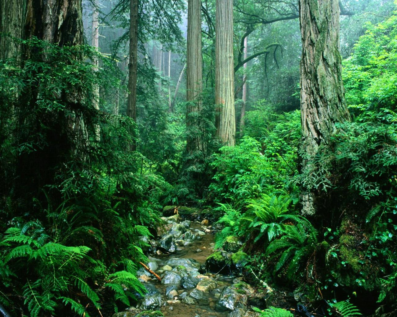 壁纸1280×1024森林树木壁纸,森林树木壁纸图片-植物