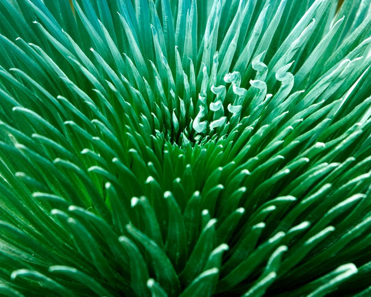 壁纸1280×1024植物绿叶高清壁纸壁纸 植物绿叶高清壁纸壁纸图片植物壁纸植物图片素材桌面壁纸
