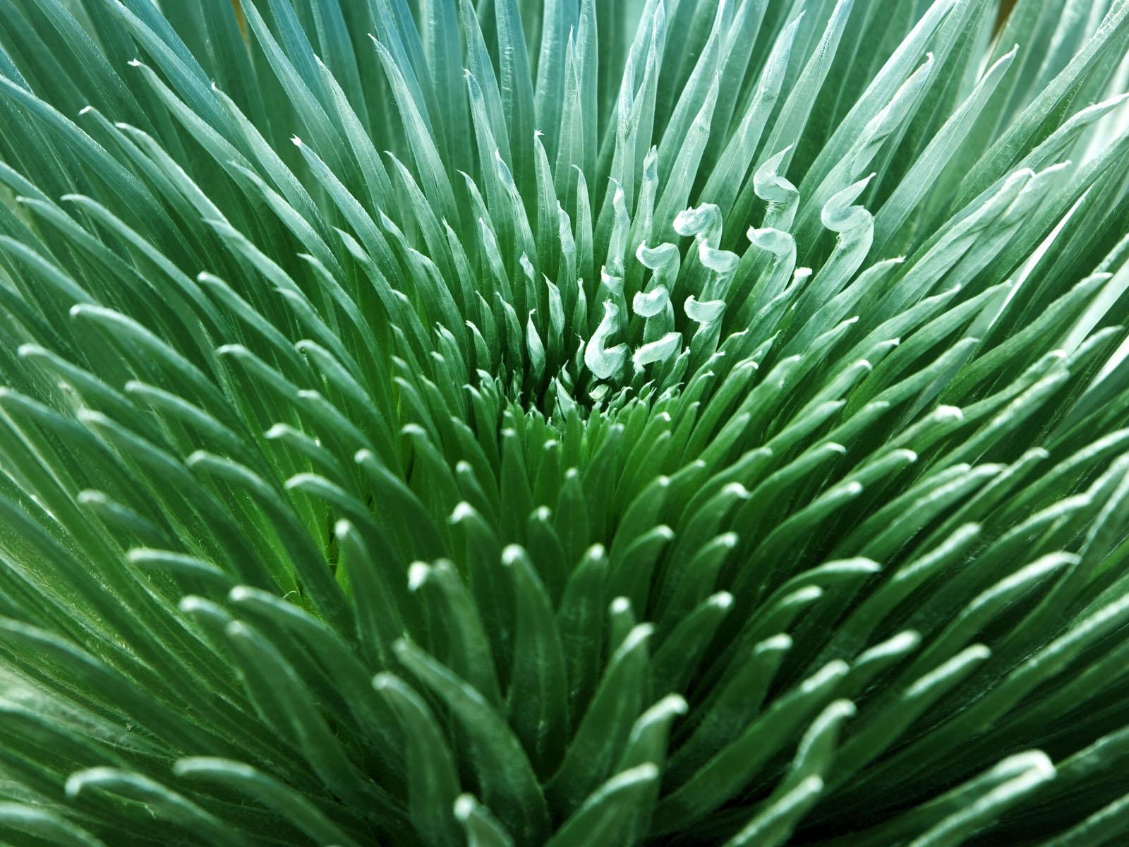 壁纸1600×1200植物绿叶高清壁纸壁纸 植物绿叶高清壁纸壁纸图片植物壁纸植物图片素材桌面壁纸